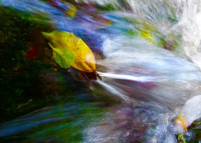 Leaf in River Flow