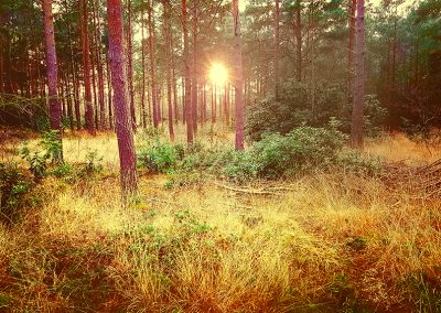 Magical Forest Sunset. Copyright Creative Bytes.